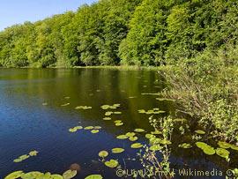 Die Behandlung der Schuppenflechte das Tscheljabinsker Gebiet